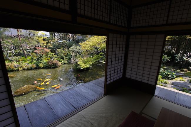 涼を求め、水の都へ。湧き水あふれる城下町・長崎県島原市への旅
