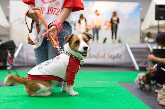 DOG!フェスタ 東海 静岡 犬 宿泊 イベント ホテル