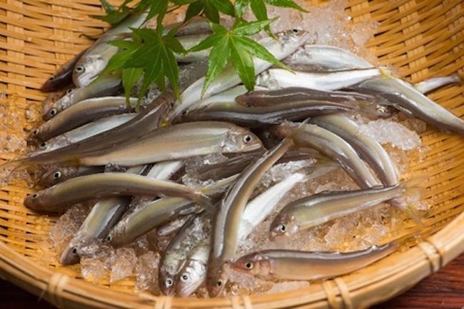 この珍 魚 、今すぐ食べたい。 琵琶湖 ではじまる極上食材ブランド化計画