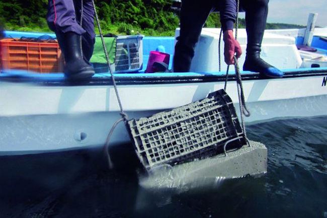 「 ウニ 」増えすぎで漁協もトホホ。 長崎 の海を「食べて」守る作戦