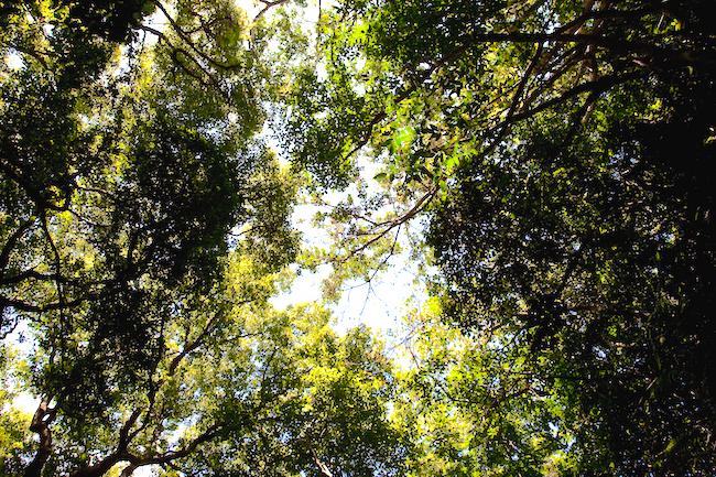 岡本太郎も衝撃を受けた。沖縄の何もない聖地「御嶽」の気を体感する