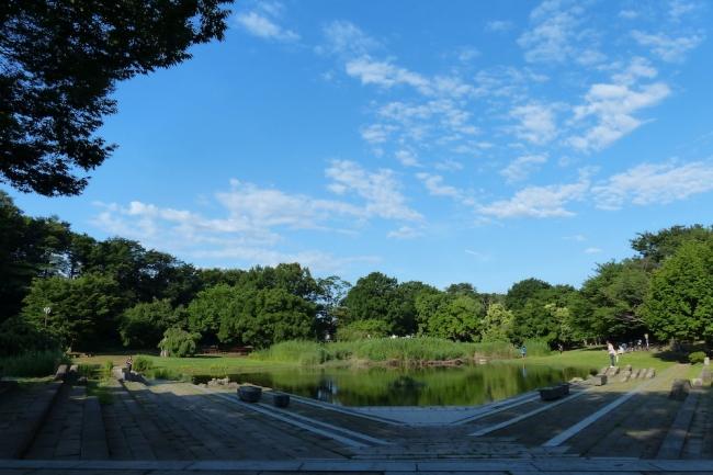 東京でホタルを見よう。清瀬市「金山緑地公園」25年の挑戦