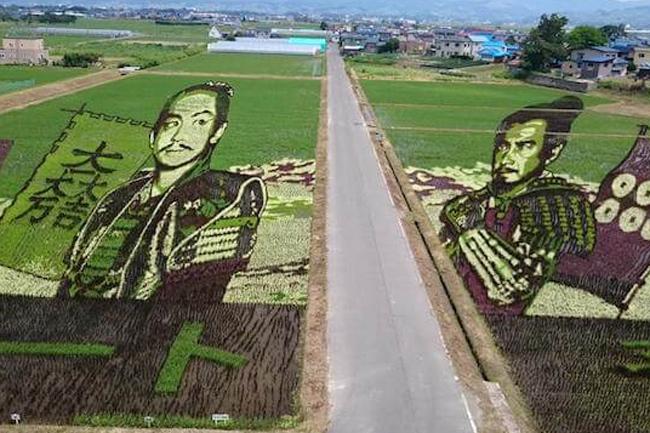 今年は「真田丸」でキタ! 青森県の恒例行事『田んぼアート』が開催