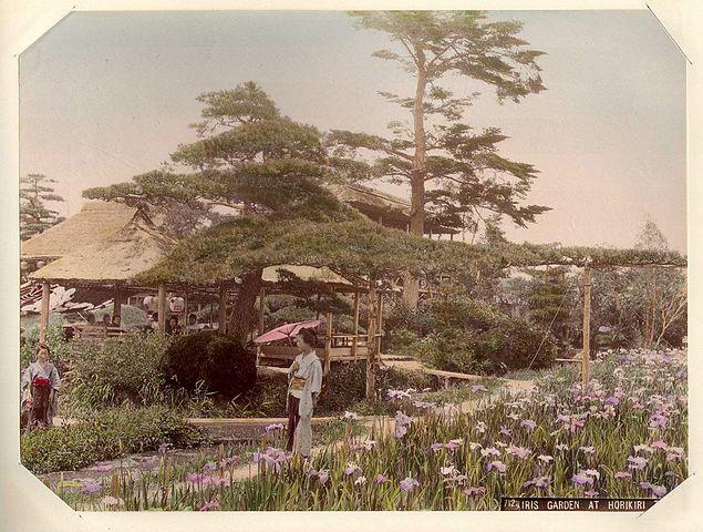 635px-Kusakabe_Kimbei_-_712_Iris_Garden_at_Horikiri,_Tokio