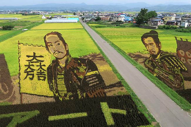 「真田丸」で話題を呼んだ田んぼアート、秋を迎えて今どうなってる?