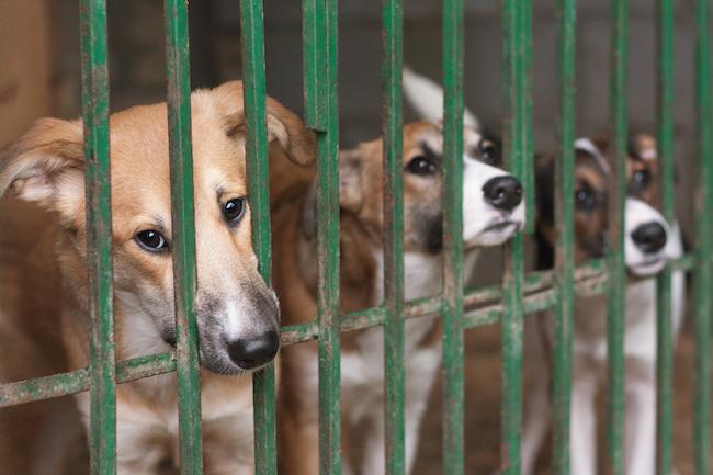 行政もがんばっている。「ペットの殺処分ゼロ」に全国の自治体が本気