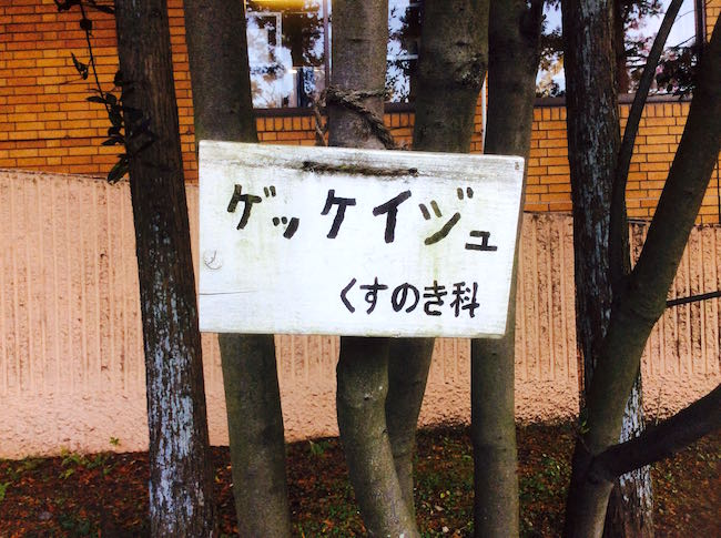 PIC_0229