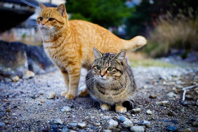 殺処分予定の猫の引き取りも。香川にある世界一猫に優しい島