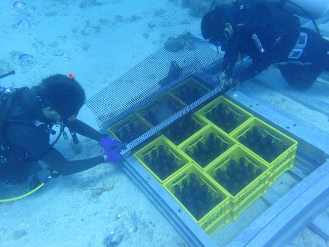 海底熟成ラム