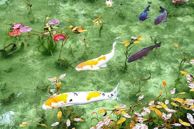 岐阜県関市板取にある、名もなき池をご紹介します。特別な施設でもないその池には、モネの絵画を再現したかのような光景が広がっています。その池がこちら。