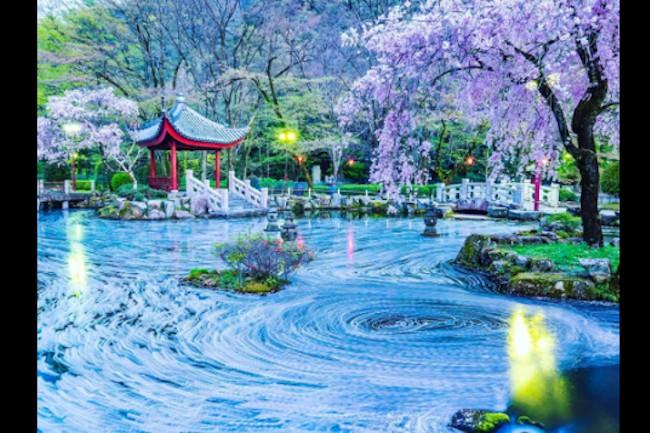 今回は岐阜公園にある『日中友好庭園』で見ることが出来る絶景をご紹介したいと思います。 岐阜県と中国の友好都市提携の10年目を記念して作られた庭園となっており、中国の雰囲気を感じられる作りになっています。 特に春の季節になると桜との素晴らしいコラボレーションを見ることが出来るので多くの人が訪れます。
