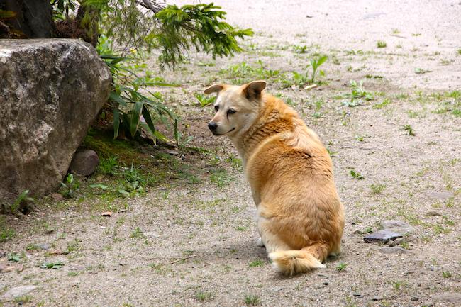 八丁の湯の看板犬