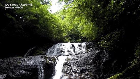 魚止めの滝画像
