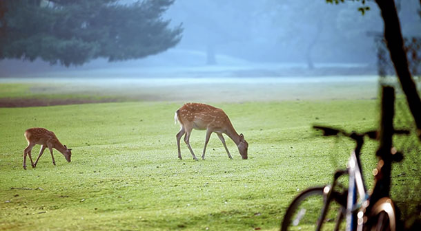 「奈良公園」の鹿