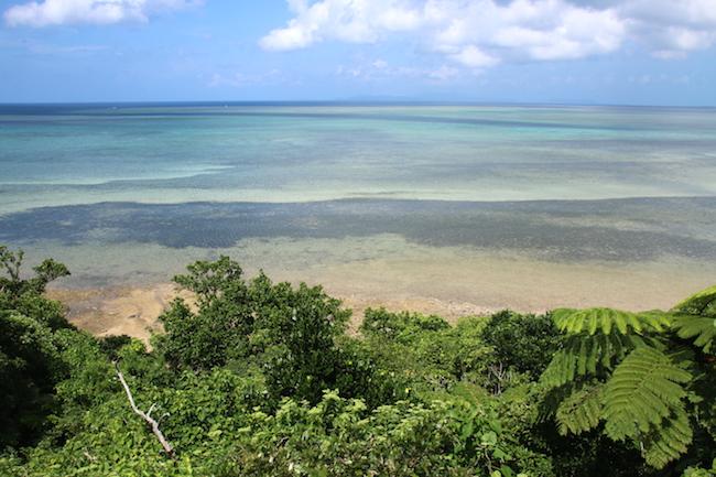 西表島 幻 海 ウミガメ 観光 ジャングル 天然記念物 魅力