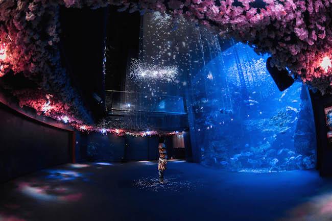 いつも脇役のアイツが春の主役に!?京都水族館にイワシと桜吹雪が舞う