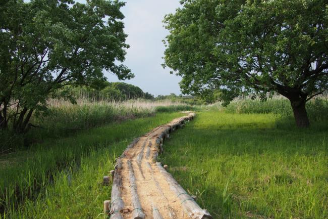 街の「緑」を守れ。茨城県守谷市の危機を救った「奇跡の自然歩道」