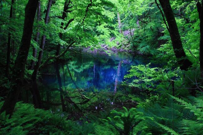 『もののけ姫』の舞台にもなった日本初の世界遺産「白神山地」
