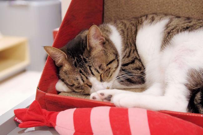 猫の里親を探してます。殺処分ゼロを目指す池袋「保護猫カフェ」