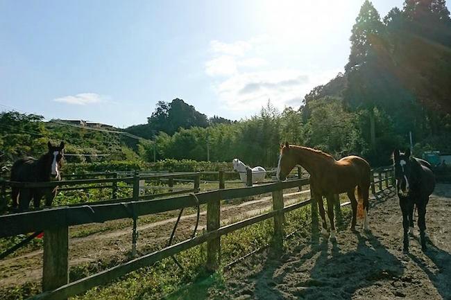 オトナの分かれ道。54歳から始めた千葉県の乗馬クラブが大成功