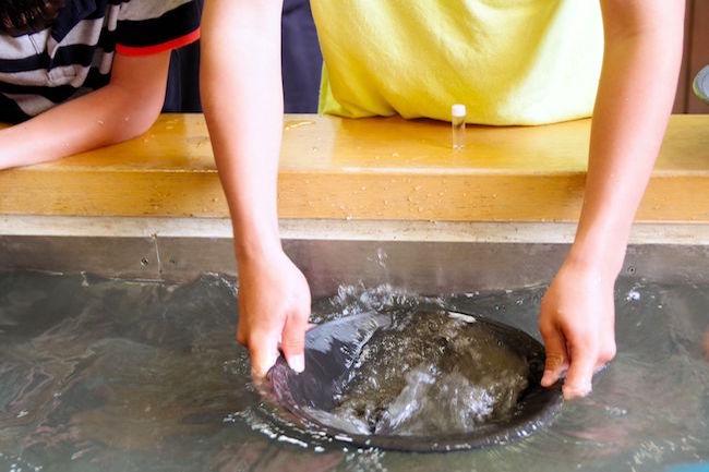 ありがとう砂金。山梨の「砂金採り」体験施設が、現在20%増量中