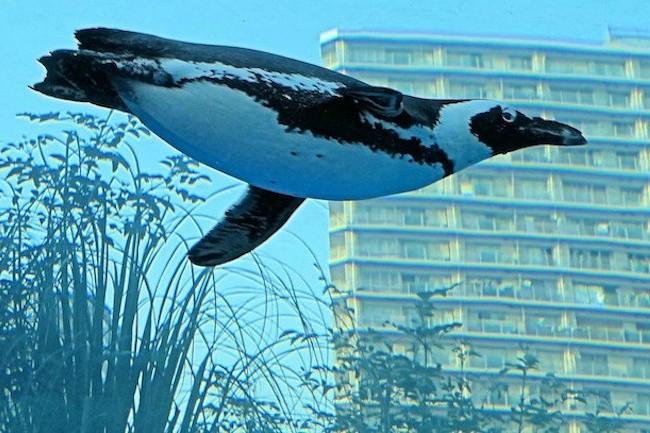 根強い人気を誇る、池袋の「サンシャイン水族館」ですが、先日新たなエリアがオープンして話題を呼んでいます。目玉は世界初の「天空のペンギン」で、都会の空をバックに、ペンギンたちが自由に水槽の中を泳ぎまわります。その姿はまさに圧巻!躍動感溢れる動物たちのユニークな展示はみものです。