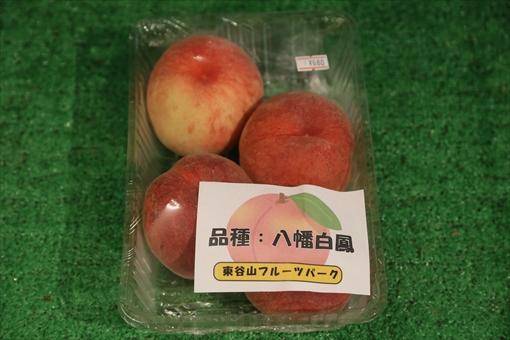 ▲東谷山フルーツパークで収穫した桃「八幡白鳳」販売中