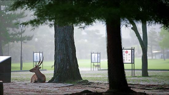 奈良公園の鹿動画